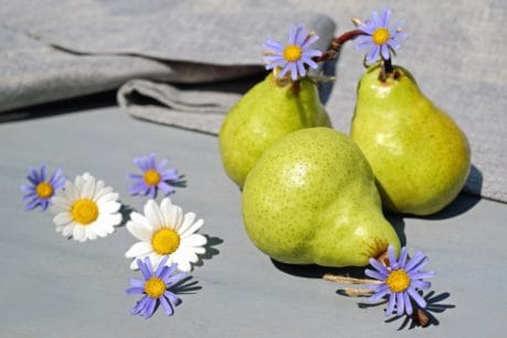 pear, fruit, flower, daisy, still life, organic, diet, sweet