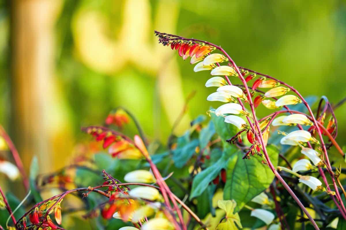 nature, flore colorée, jardin, feuille, plante, arbre