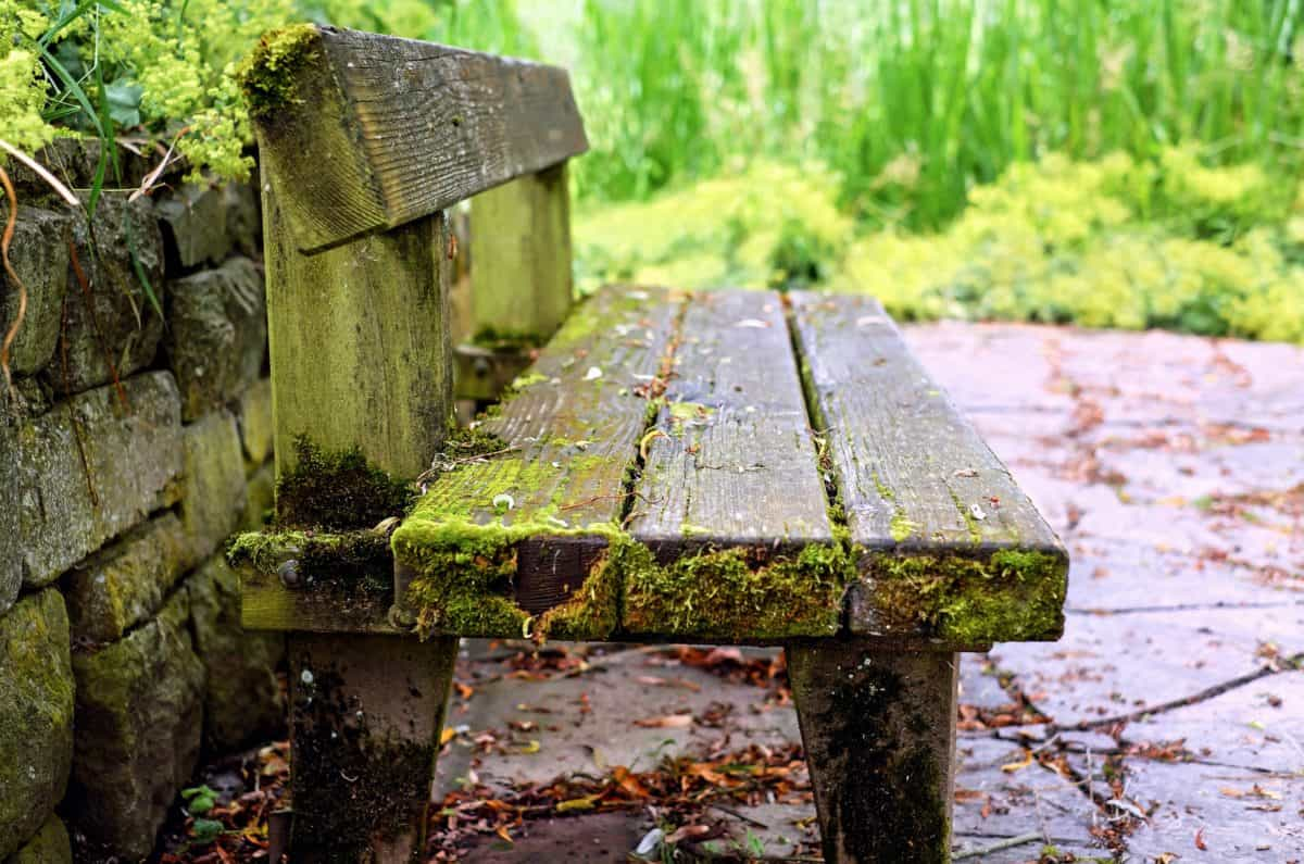 stone, nature, wood, bench, outdoor, tree, grass, object