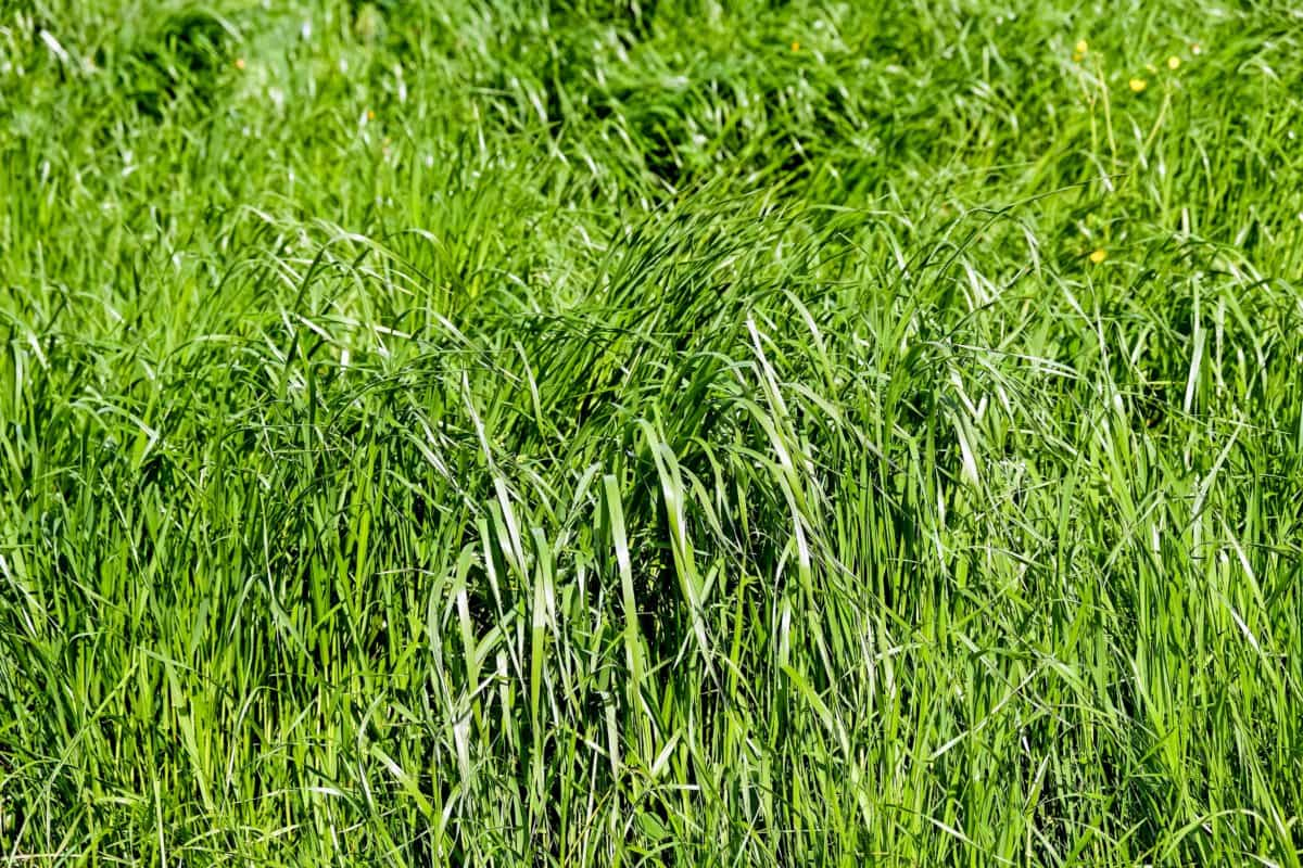 summer, nature, field, flora, leaf, turf, lawn, grass, plant