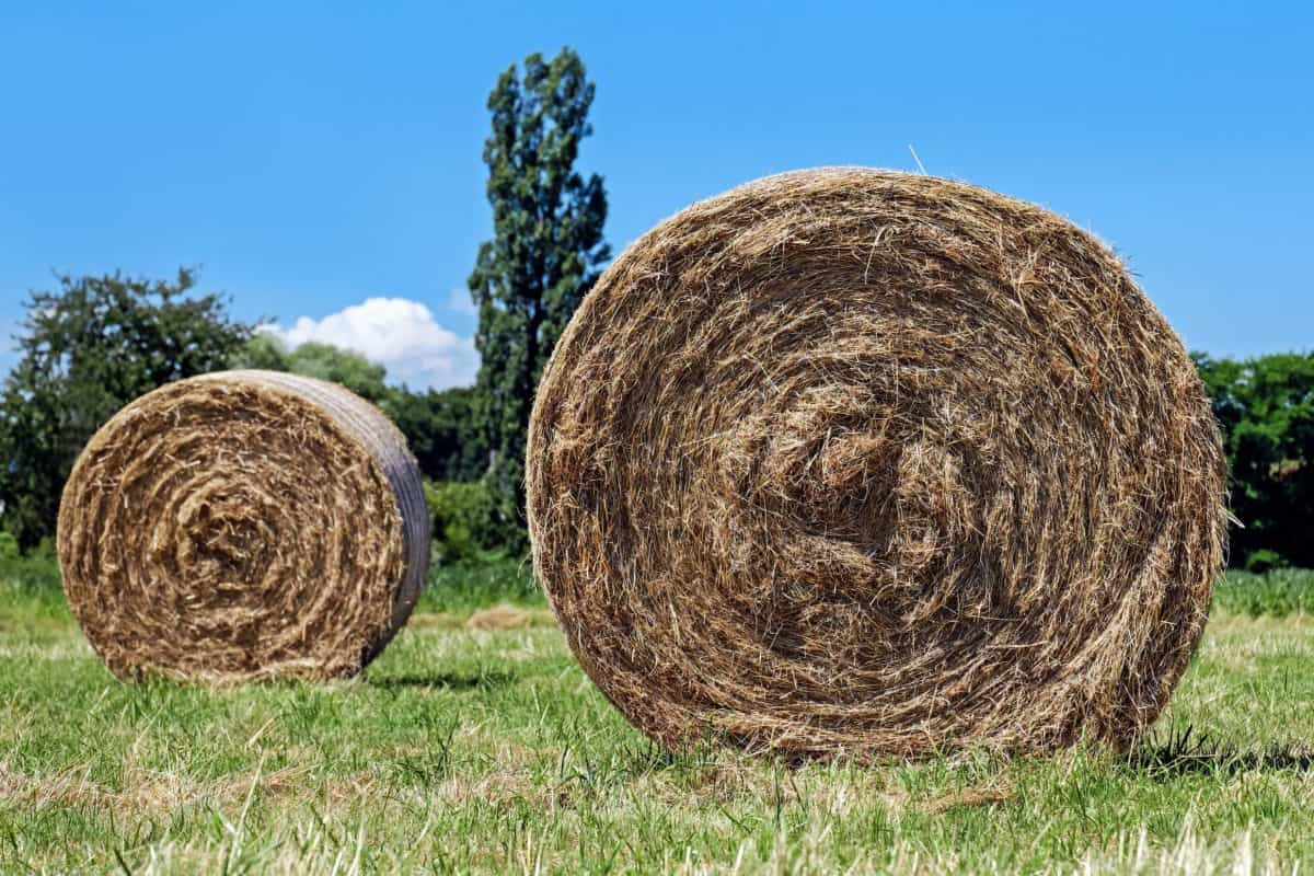 field, food, agriculture, straw, farm, landscape, countryside