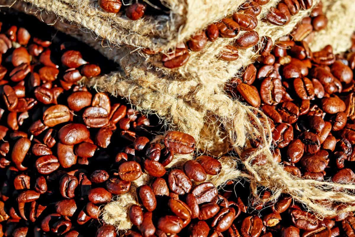seed, coffee, food, drink, bean, brown, caffeine, espresso