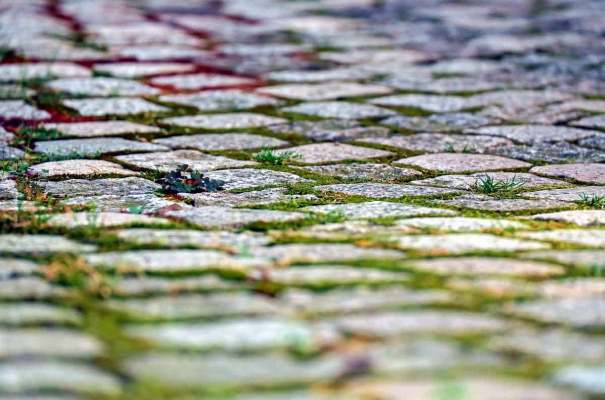 road, stone, pavement, grass, moss, brick