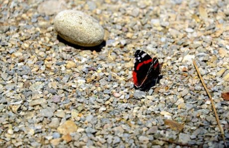 gravel, stone, nature, insect, butterfly, texture, beach