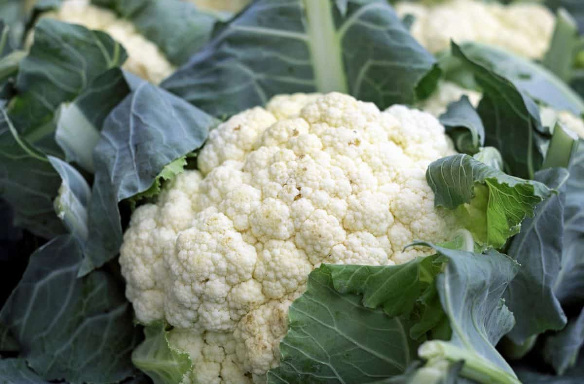 food, nature, vegetable, leaf, cauliflower
