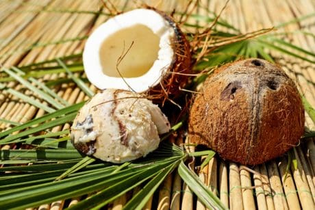 coconut, food, tropical fruit, organic, reed, leaf, wood
