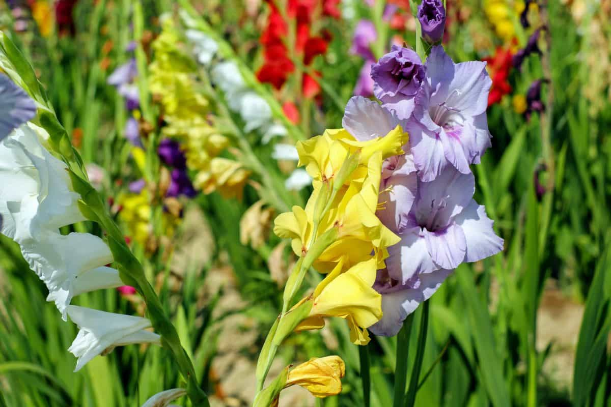 lato, kwiat, charakter, pola, liść, flora, ogród