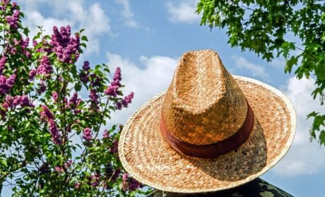 summer, nature, hat, sombrero, tree, outdoor
