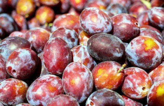 fruit, food, delicious, plum, vitamin, organic, sweet, diet