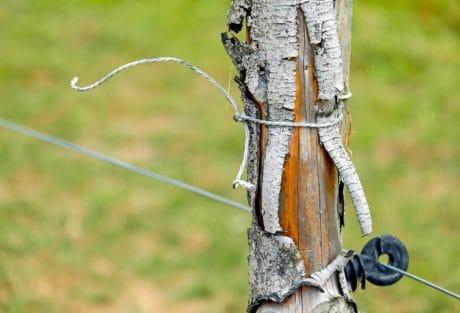 pillar, bark, wood, fence, metal, steel, wire, grass, outdoor