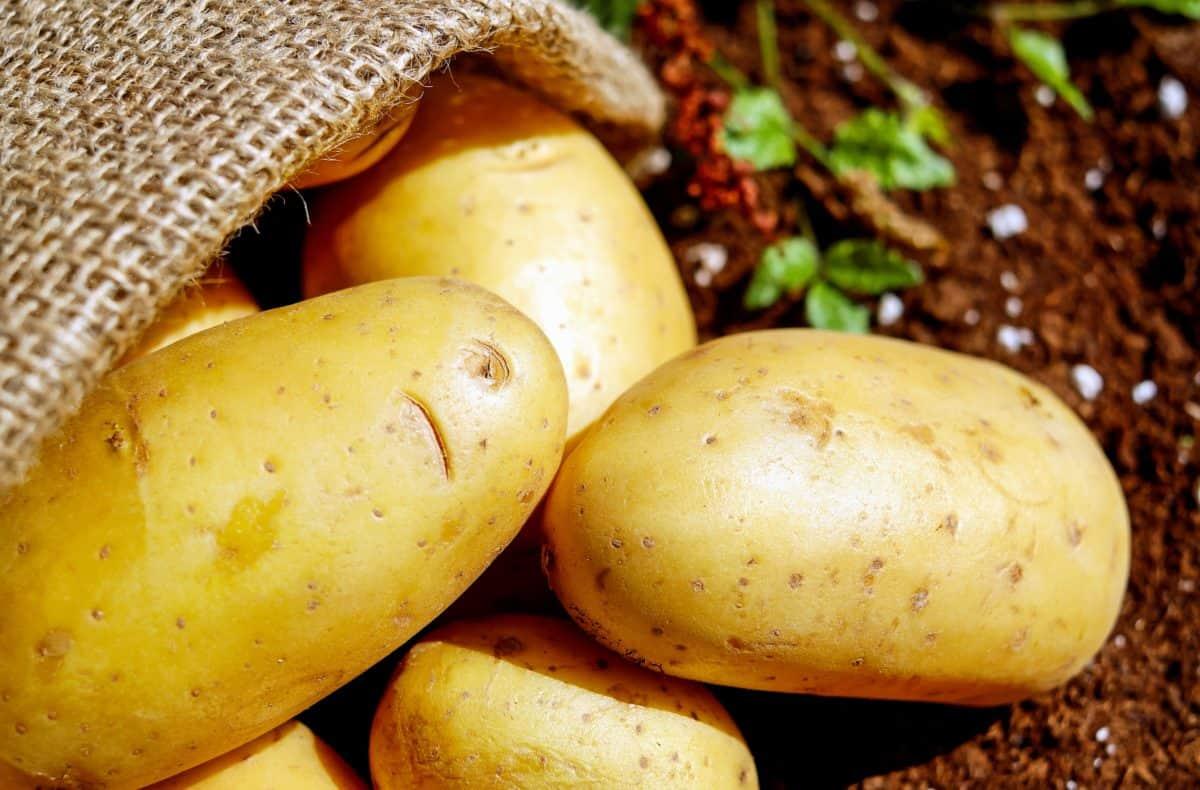 taška, zelenina, potraviny, organické, brambor, výživa