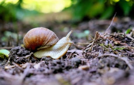 snail, nature, garden, shell, invertebrate