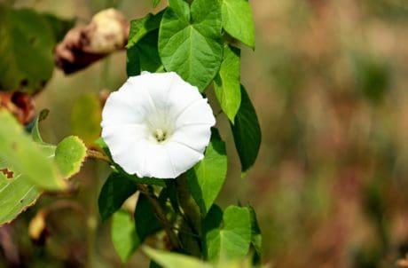 ใบ ธรรมชาติ สวน พืช ดอกไม้ พืช ดอก สมุนไพร