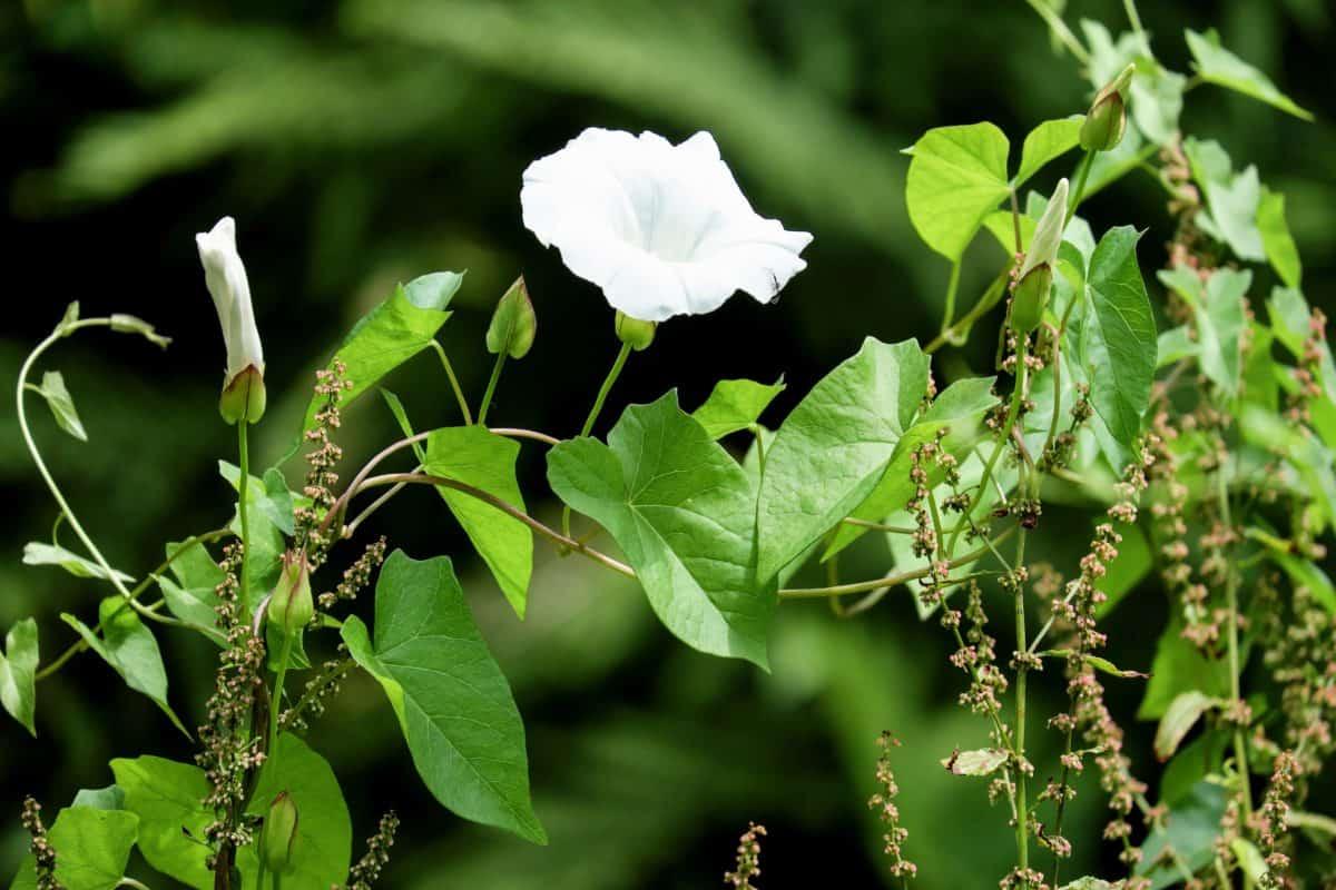 natureza, jardim, folha, flor, flora, plantas, árvore, ao ar livre