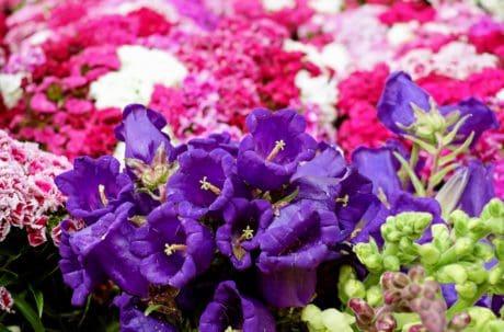 flore, bouquet, pétale, feuille, jardin, nature, fleur, plante, herbe