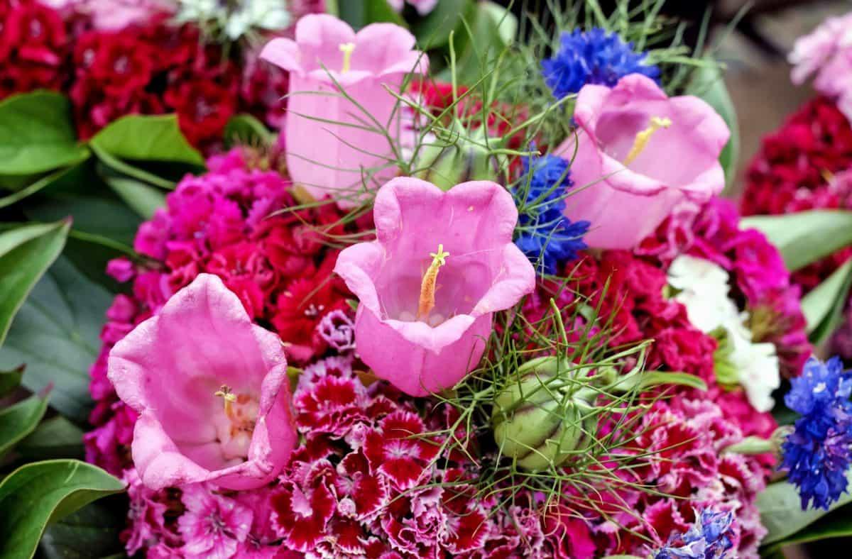 Foto gratis natura mazzo fiore petalo foglia for Rosa pianta