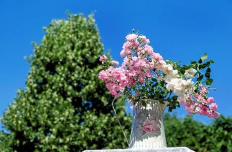 ramo, ramalhete, vaso, flora, jardim, árvore, flor, natureza, plantas, flores