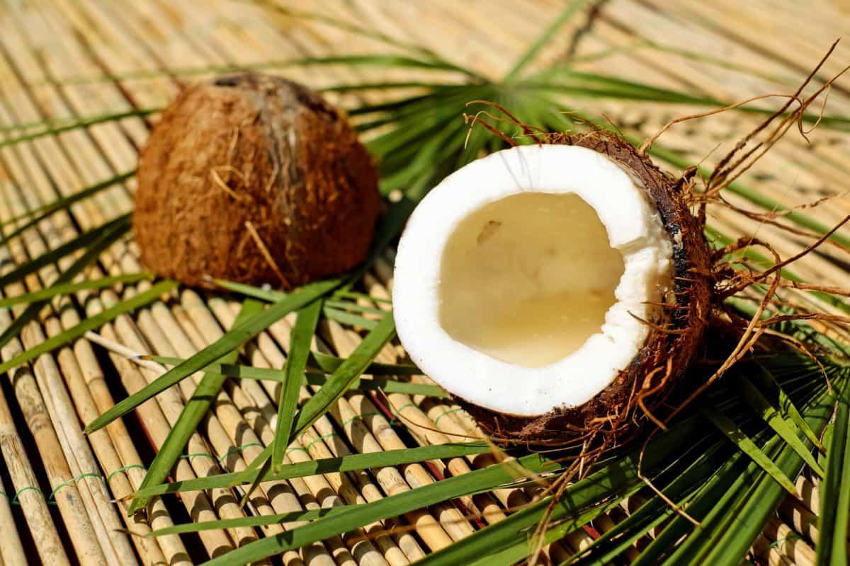 food, wood, coconut, cod, exotic fruit, leaf, food, nutrition