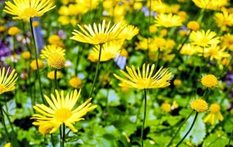 Verão, jardim, natureza, flores, campo, flora, grama, erva
