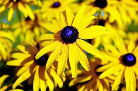 garden, nature, flora, yellow flower, summer, plant, petal