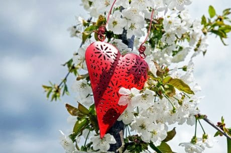 summer, branch, garden, nature, flora, tree, heart, red love, leaf, flower