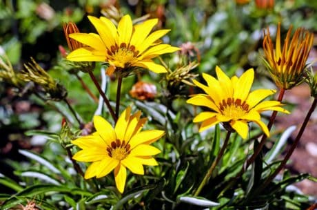 virág, levél, kert, növények, természet, nyári, növény
