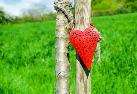 grass, nature, outdoor, love, red, heart, decoration, wood