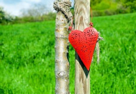 trawa, natura, odkryty, miłość, czerwony, serce, dekoracja, drewno