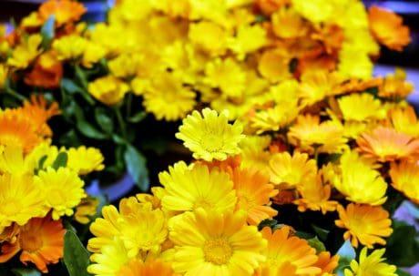 φύση, καλοκαίρι, φύλλα, Κήπος, χλωρίδα, λουλουδιών, βότανο, φυτό