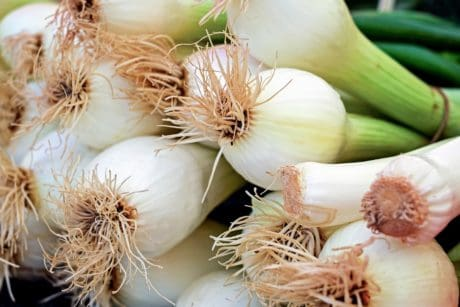onion, food, garlic, vegetable, root, spice, organic