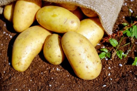 vegetable, food, nutrition, potato, nutrition, soil, vegetables, organic, plant, bag