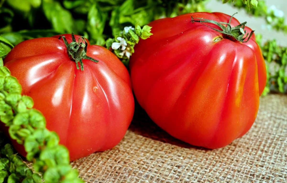 харчування рослинна харчування, помідор, Вегетаріанська