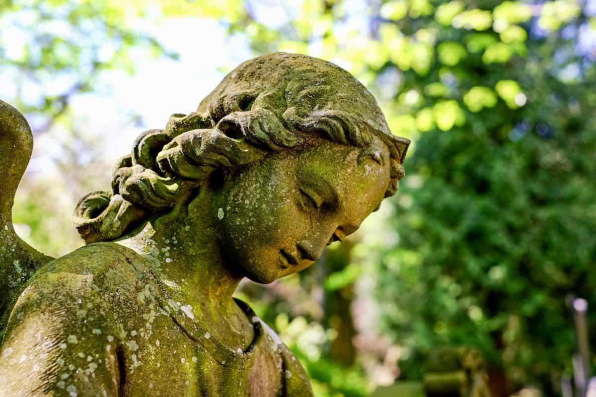 estatua, escultura, árbol, arte, piedra, mármol, Ángel