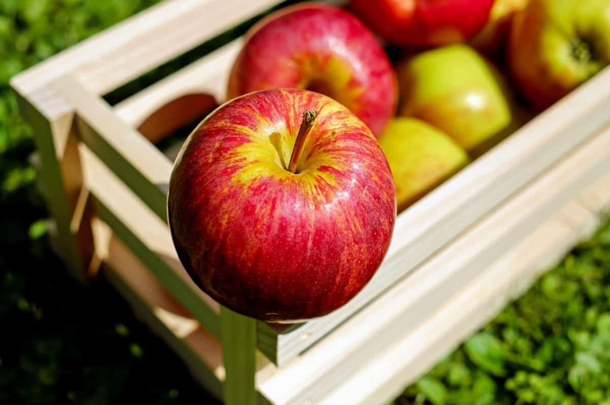 Obst, Apfel, sehr lecker, Ernährung, Äpfel, Vitamin, Ernährung