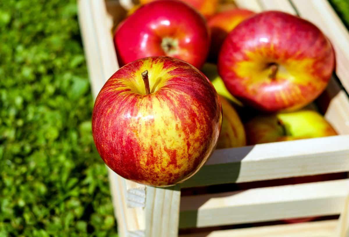 Как хранить яблоки зимой в домашних условиях 18