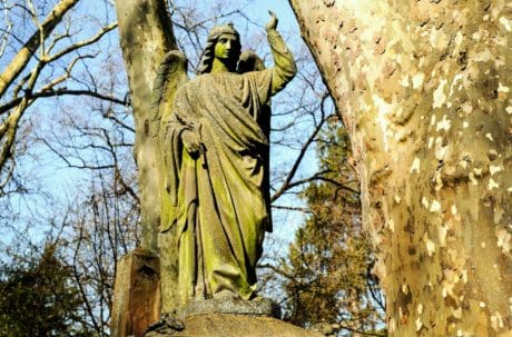 nature, tree, wood, statue, outdoor, marble, angel