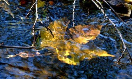 réflexion, flux, nature, eau, feuille, rivière, arbre, lac