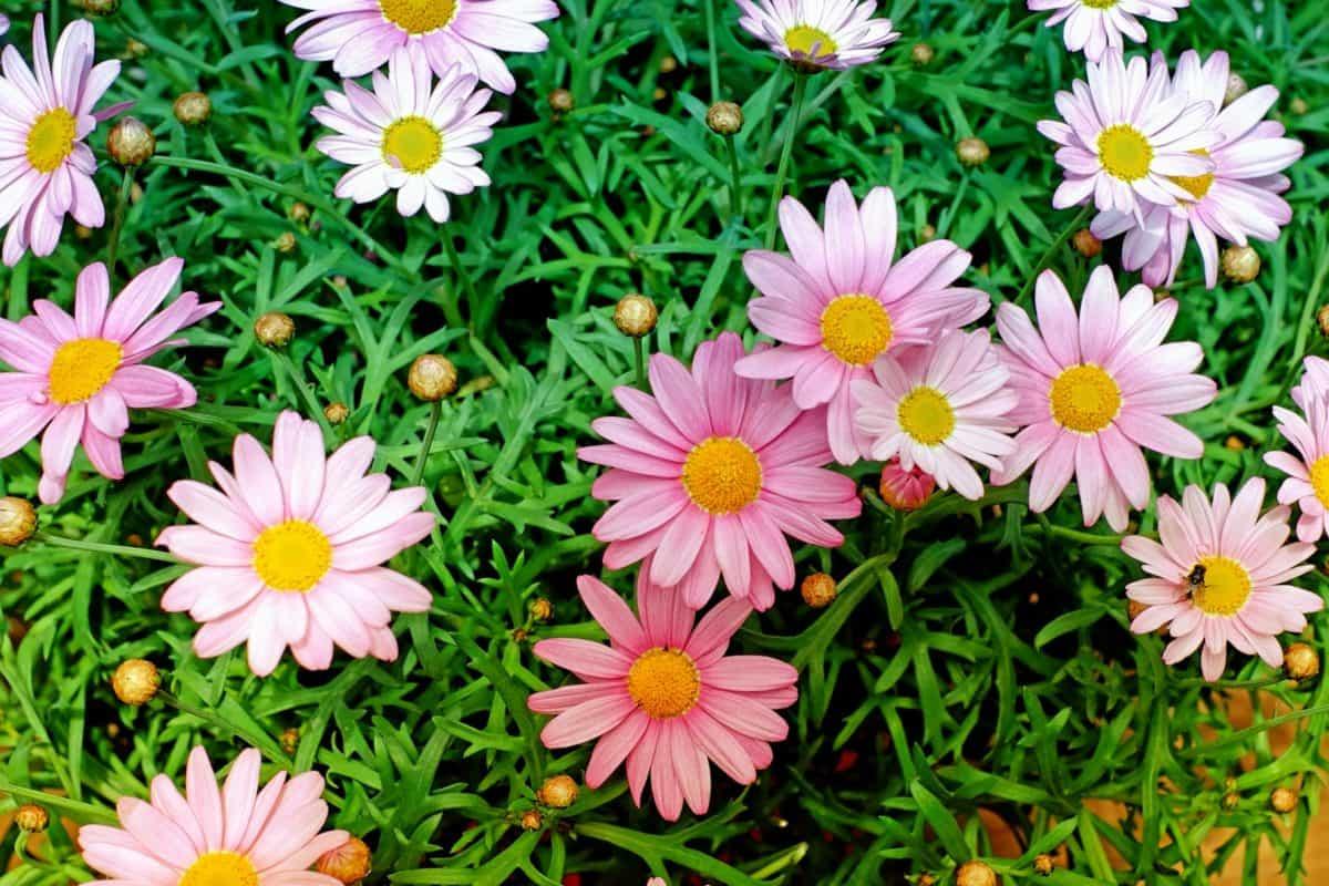 field, garden, nature, flora, flower, leaf, grass, summer