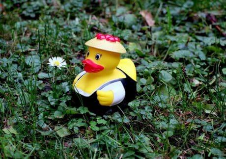 fiore, erba, pianta, giocattolo, decorazione, oggetto
