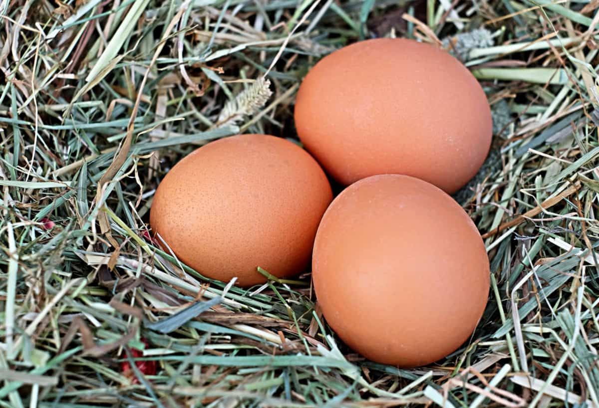 Easter, decoration, food, nest, egg, eggshell, grass