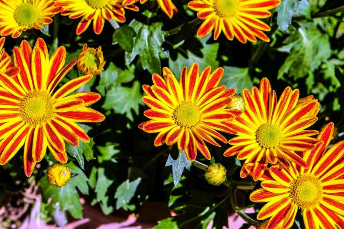 cvijet, ljeto, priroda, latica, vrt, flore, biljka