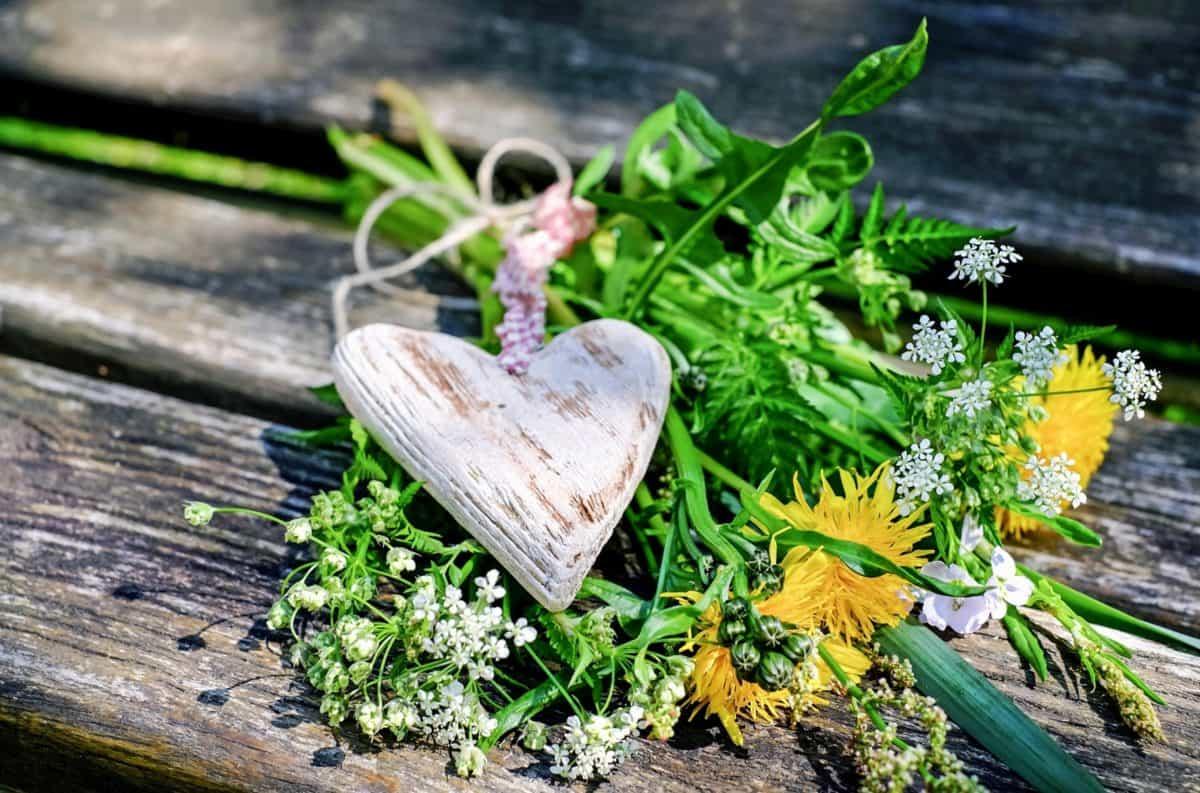 Natur, Blatt, Flora, Blume, Kraut, Pflanze, Boden, Herzen, Dekoration