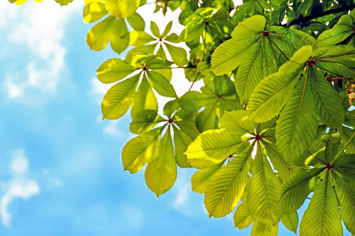 leaf, sunshine, nature, outdoor, plant,  tree, blue sky, green