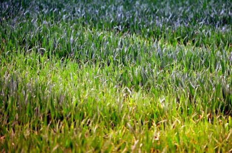 nature, garden, green grass, flora, summer, leaf, environment, field, lawn