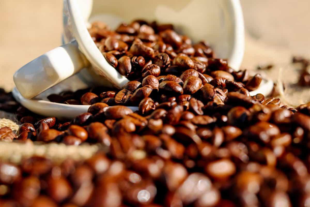 café, nourriture, boisson, caféine, haricot, expresso, brun