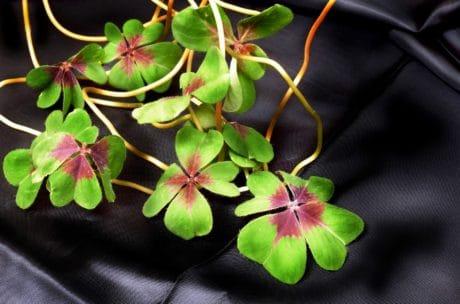nature, flora, garden, leaf, flower, herb, indoor
