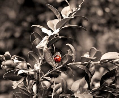 insect, ladybug, detail, leaf, nature, branch