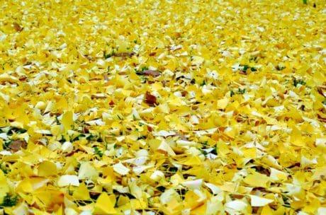 naturaleza, hoja, planta, textura, otoño