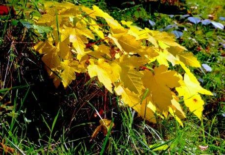 treet, blad, natur, flora, høst, anlegg, skog