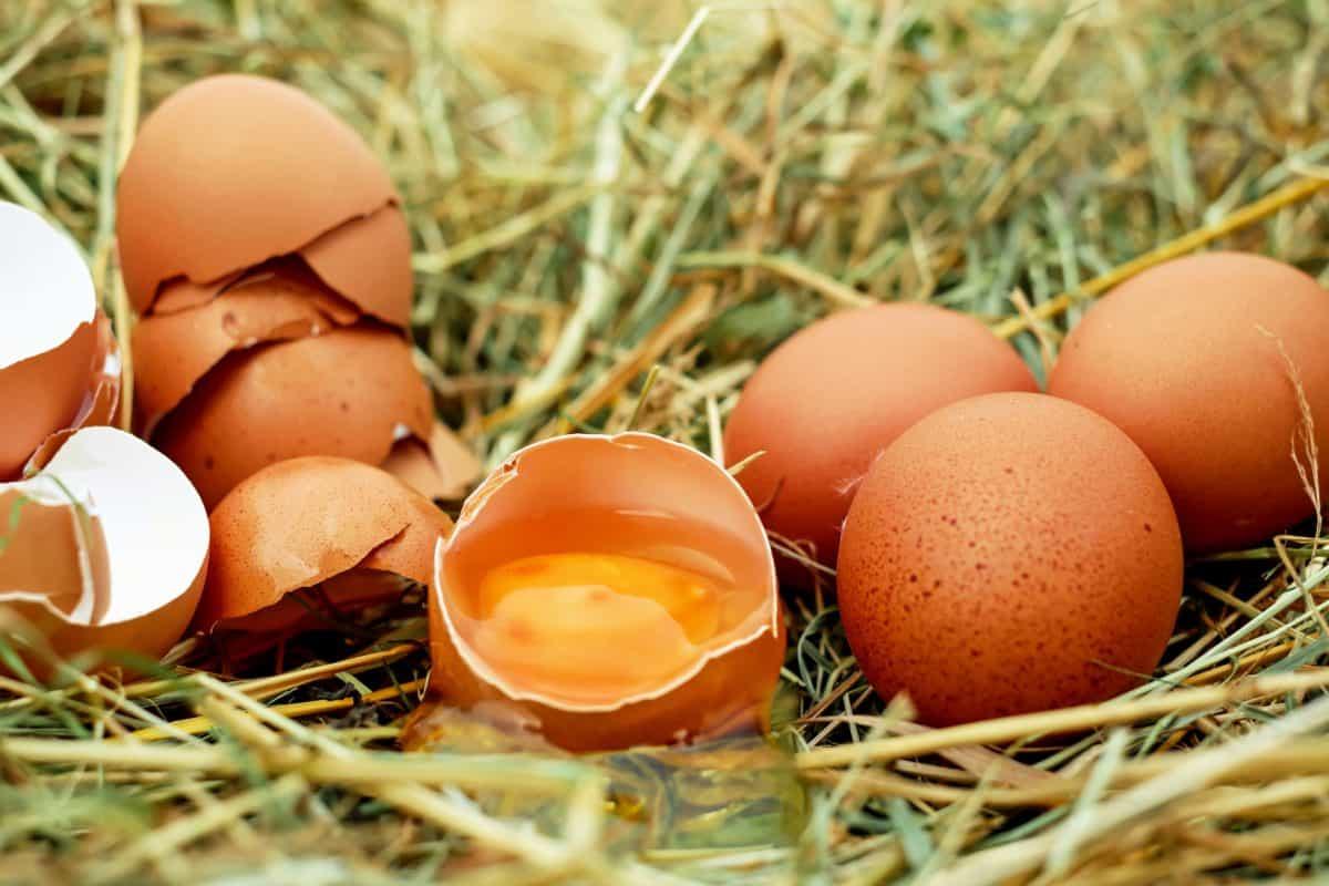 jídlo, příroda, hnízdo, vejce, snídaně, skořápka